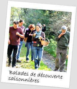 Balades plantes comestibles - cuisine sauvage